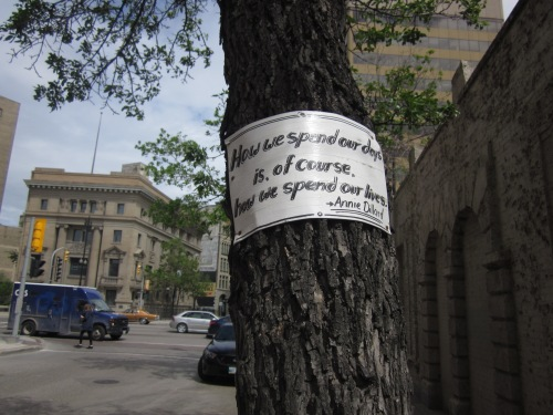 annie dillard quote on a tree on bannatyne avenue