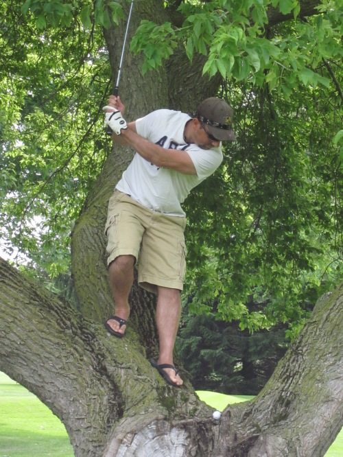 golf shot in the tree
