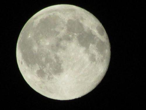 blue moon austin
