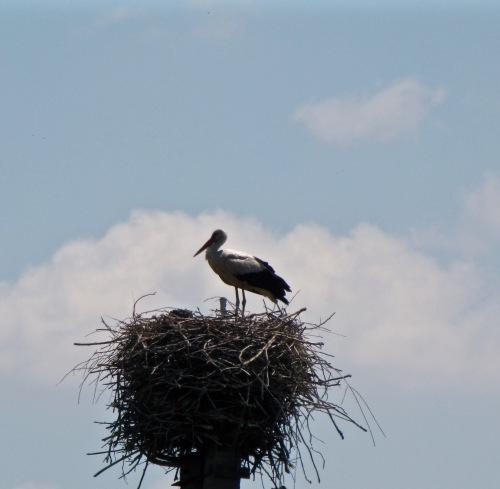 stork in ukraine