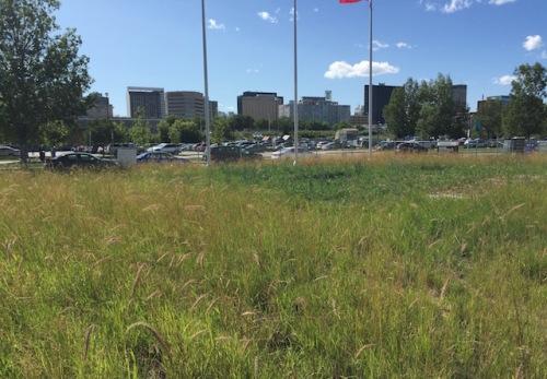 wild grass human rights museum