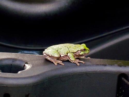 frog hecla island