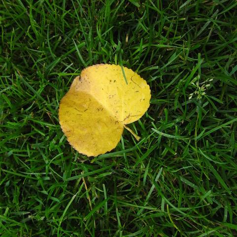 gold leaf hecla island