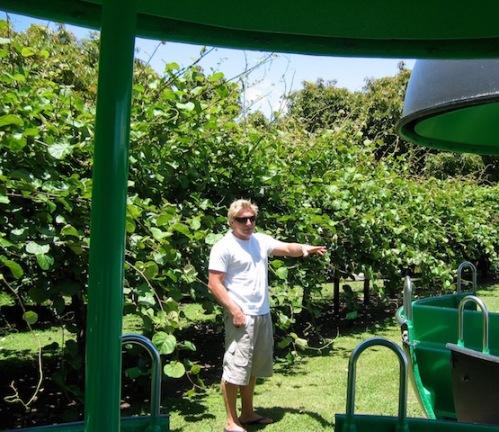 kiwi farmer new zealand
