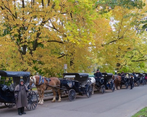 carriages-waiting-for-riders-in-quebec-city