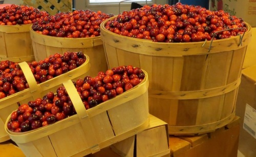 cranberries-at-the-farmers-market-in-quebec-city