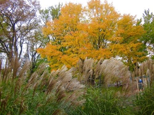 fall-grasses-quebec-city