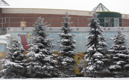 Winter Pines at the Goldeyes Stadium