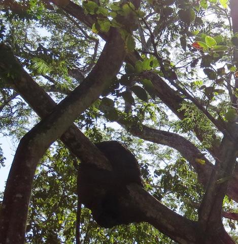 black-termite-nest