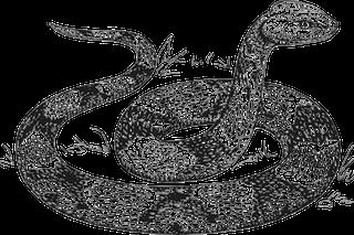 copperhead-snake-pixabay