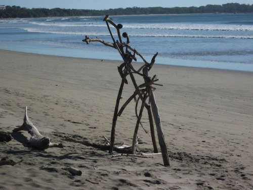 driftwood on playa grande