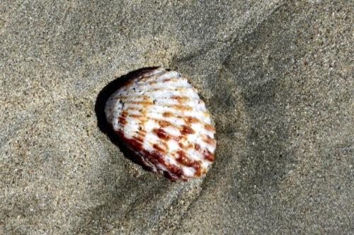 shell costa rica 2