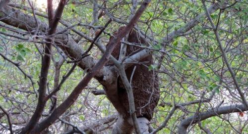 termite-nest