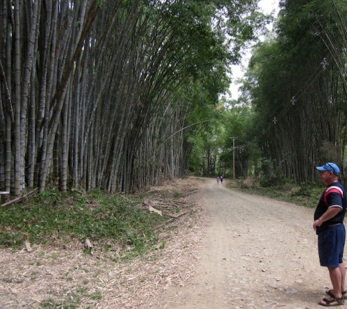 dave looks at bamboo forest