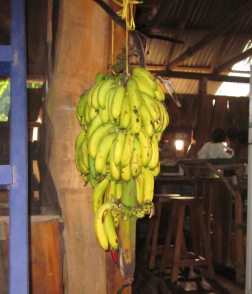 Help yourself bananas outside the lounge