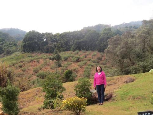 landscape san gerado