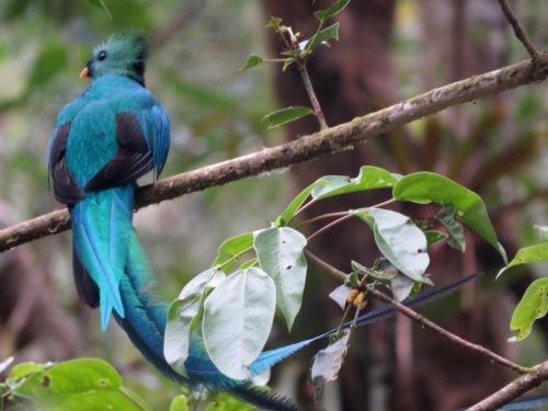 quetzal 6