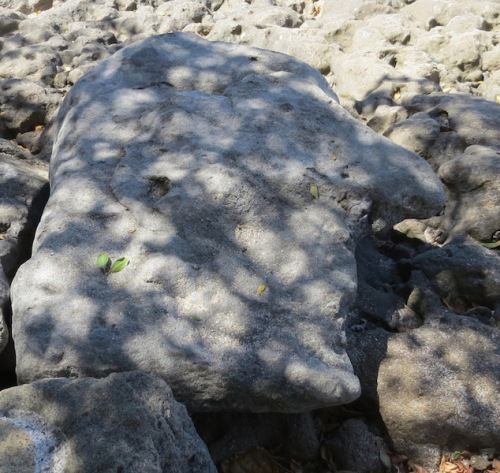 Roxk shaped like a bird's head at Playa Longest