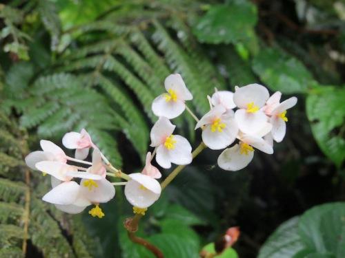 flower costa rica 1jpg