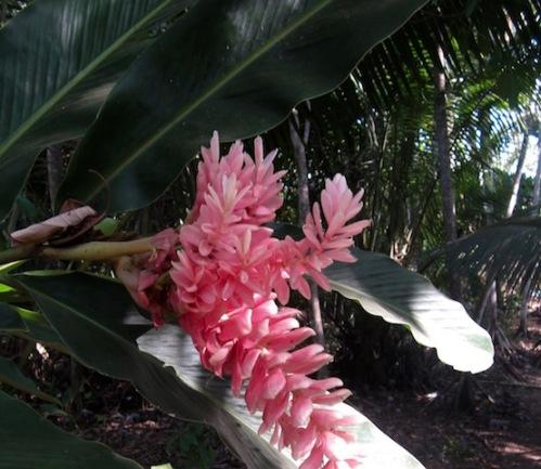 flower costa rica 5
