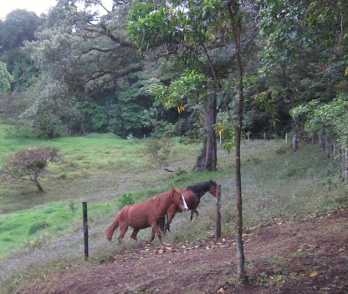 horses costa rica