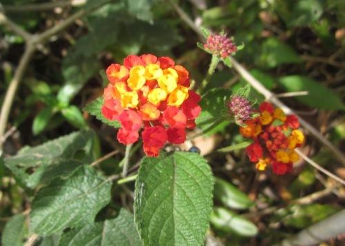 IMG_2costa rica flower 3387