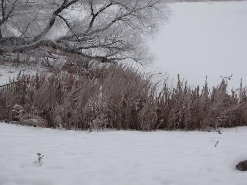 winter in exchange district winnipeg