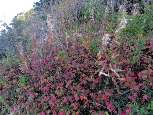 fall-colors427