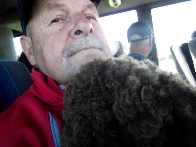bison fur