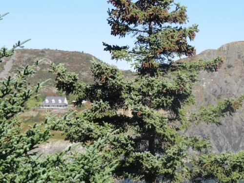 williams-rest-through-trees