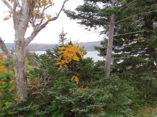 autumn-in-nfld