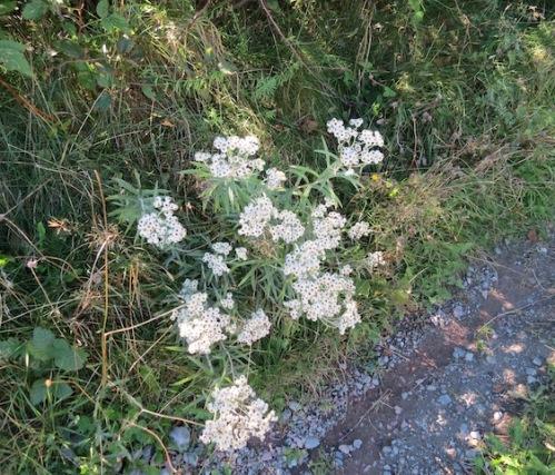 flowers-old-perlican