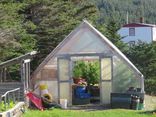 greenhouse-bonavista-social-club