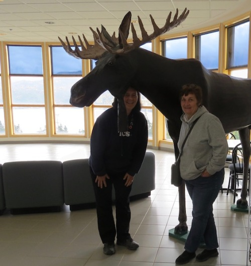 the-moose-at-the-tablelands-discovery-centre