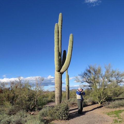 Hans gets ready to take a photo beside a saguaro cactus that we learned weighs 10 tons. We hoped it wouldn't fall on him!