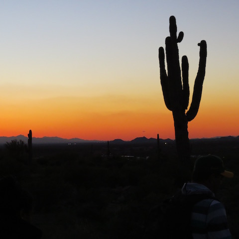cactus-in-the-setting-sun
