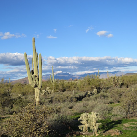 four-peaks-with-desert-in-foreground