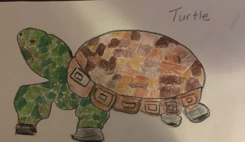 grandmas-turtle-drawing