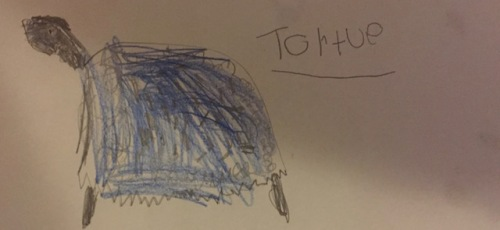 grandsons-turtle-drawing