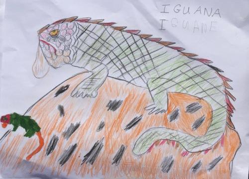 iguana-drawing