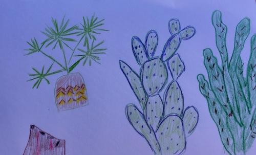 cacti backyard