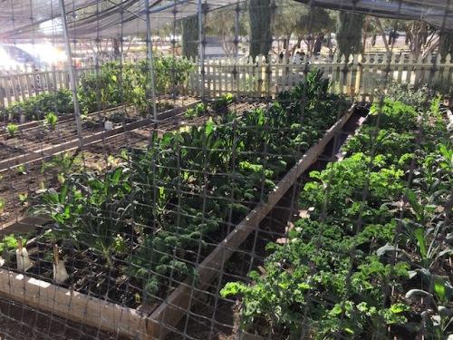 organic-garden-olive-mill