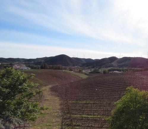 vineyard portugal