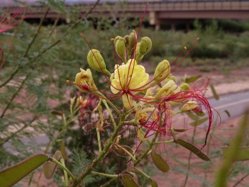 flower utah