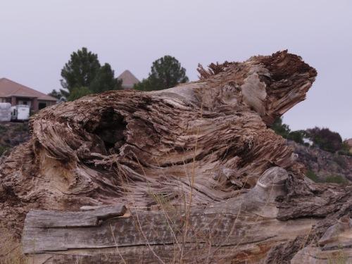 iguana tree formation