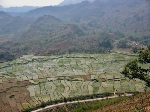 fields in vietnam