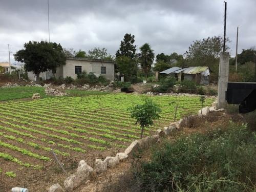 garden merida walk