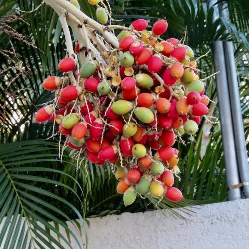 berries mexico