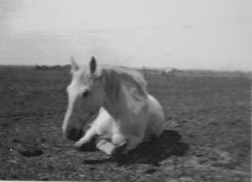general horse