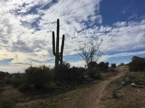 desert hiking trail